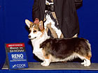 GCH Rocky L Pennies From Heaven